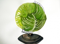 Cabbage Globe 40x60cm 2011