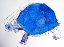 Timelines (tortoise) 40x60cm 2011